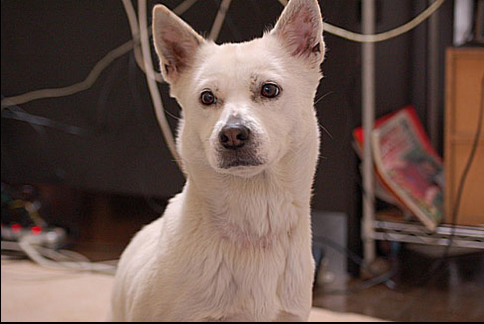 モラキジドッグ MIX犬